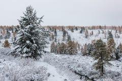 Primeira queda de neve Foto de Stock Royalty Free