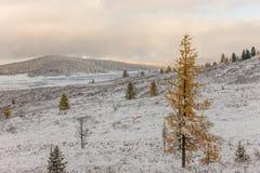 Primeira queda de neve Imagens de Stock