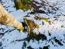 Primeira queda de neve em Fontecerro Rieti Itália Imagens de Stock