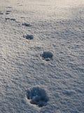 Primeira queda de neve em Fontecerro Rieti Itália Fotografia de Stock