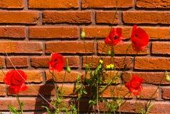 Primeiramente florescência das flores na mola fotografia de stock royalty free