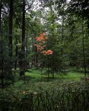 Primeiras etapas do outono Foto de Stock Royalty Free