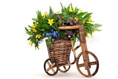 Primeiras flores da mola Imagem de Stock Royalty Free