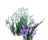 Primeiras flores da mola Fotos de Stock Royalty Free