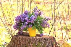 Primeiras flores da mola Apenas chovido sobre Fundo da mola Ramalhete de flores da floresta Fotografia de Stock