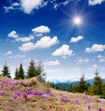 Flores da mola nas montanhas Imagem de Stock