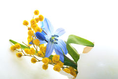 Primeiras flores da mola, snowdrops azuis e mimosa na casca de ovo Fundo do feriado da Páscoa Fotografia de Stock Royalty Free