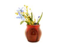 Primeiras flores da mola, snowdrops azuis e mimosa na vasilha de barro Fotografia de Stock Royalty Free