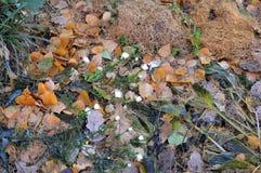 Primeiras geadas do outono imagens de stock