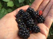 Primeiro Blackberry fotos de stock royalty free