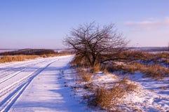 Primeiro dia do inverno Árvores cobertos de neve nos montes da neve f Foto de Stock