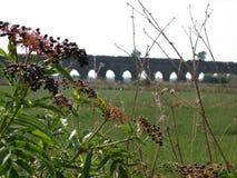 Primeiro plano das flores do campo com afinal um aqueduto romano antigo roma Italy Imagens de Stock