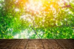 Primeiro plano de madeira com conceito verde do verão da árvore foto de stock