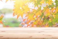 Primeiro plano de madeira com a floresta do bordo do outono do borrão foto de stock royalty free