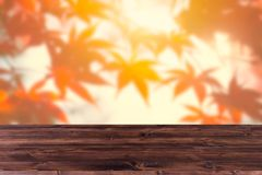 Primeiro plano de madeira com fundo da floresta do bordo vermelho do borrão imagem de stock royalty free
