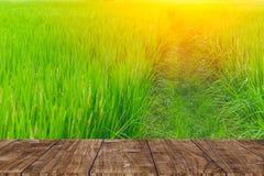 Primeiro plano de madeira no campo do arroz imagem de stock