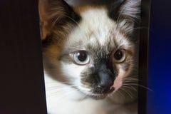 Primeiro plano de um gato bonito imagens de stock
