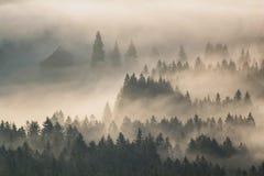 Primeiros raios ensolarados no vale nevoento Fotos de Stock Royalty Free