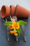 Primel mit alter Gartengabel und Tongefäßen Stockfotografie