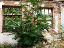 Primer abandonado de la casa Foto de archivo libre de regalías