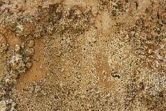 Primer abstracto de Sandy Rocky Ground Texture fotos de archivo
