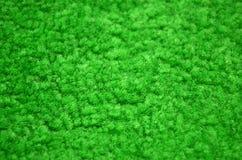 Primer alfombrado verde Fotografía de archivo libre de regalías