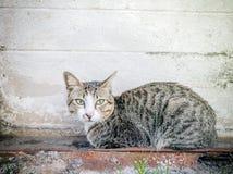 Primer animal Cat Domestic linda, gato del gato de los temas de la acción de la acción Foto de archivo