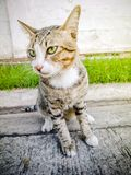 Primer animal Cat Domestic linda, gato del gato de los temas de la acción de la acción Imágenes de archivo libres de regalías