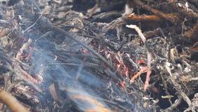 Primer ardiendo de la hierba metrajes
