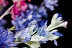 Primer azul falso artificial del aciano, aislado en un CCB negro Fotografía de archivo
