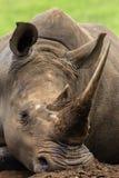 Primer blanco de la pista del rinoceronte Fotos de archivo libres de regalías