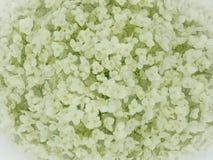 Primer blanco del hortensia Fotografía de archivo libre de regalías