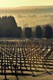Primer cementerio de los militares de la guerra mundial Imagen de archivo libre de regalías