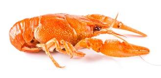 Primer cocinado de los cangrejos Fotografía de archivo libre de regalías