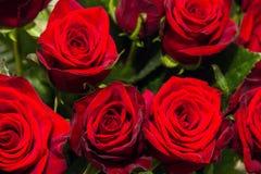Primer color de rosa del rojo Ramo fotografía de archivo
