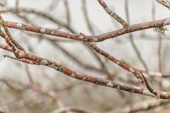 Primer coloreado de las ramas de árbol Imagen de archivo libre de regalías