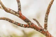 Primer coloreado de las ramas de árbol Fotos de archivo libres de regalías