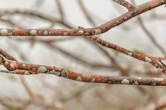 Primer coloreado de las ramas de árbol Foto de archivo libre de regalías