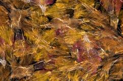 Primer colorido del pétalo de la flor Imagen de archivo libre de regalías