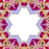 Primer concéntrico amarillo de la macro del centro de la flor ilustración del vector
