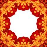 Primer concéntrico amarillo de la macro del centro de la flor libre illustration