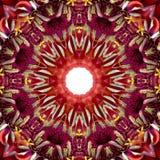 Primer concéntrico de la macro del centro de la flor ilustración del vector