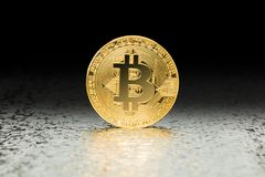 Primer crypto de la moneda de Bitcoin foto de archivo libre de regalías