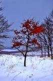 Primer día de invierno Árboles nevados en las colinas de la nieve f foto de archivo