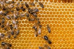 Primer de abejas en el panal en colmenar Foto de archivo