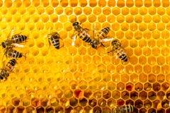 Primer de abejas en el panal en colmenar Fotos de archivo