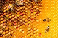 Primer de abejas en el panal en colmenar Imagen de archivo libre de regalías