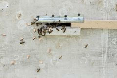 Primer de abejas en el panal en colmenar Fotos de archivo libres de regalías