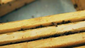 Primer de abejas en marcos de madera de la miel en la colmena en colmenar Foto de archivo