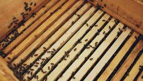 Primer de abejas en marcos de madera de la miel en la colmena en colmenar Fotografía de archivo